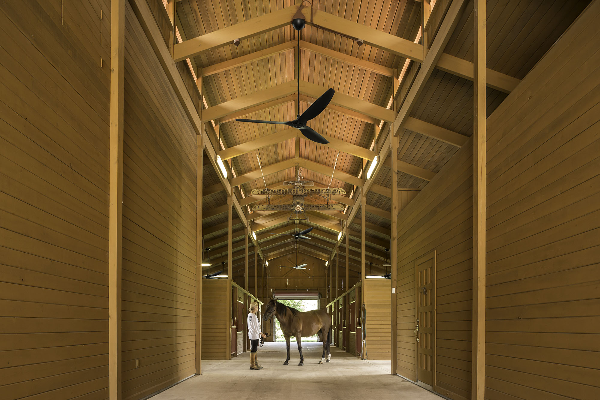 woman tending a thoroughbred horse in beautiful wood paneled barn with Haiku fans